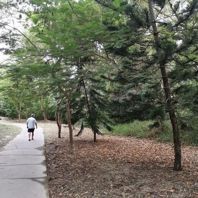大崗山步道