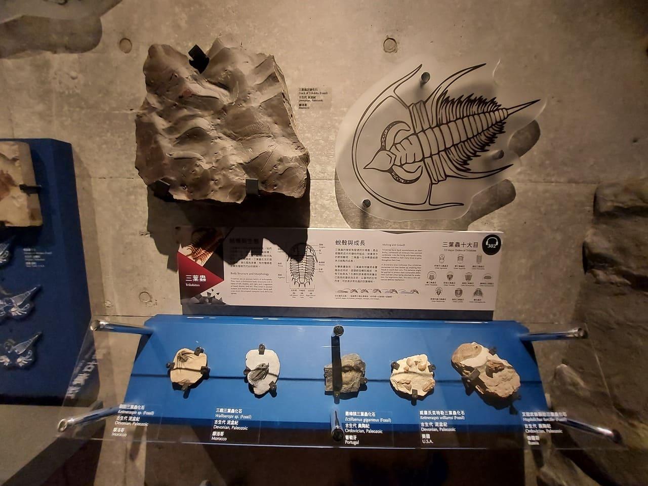左鎮化石園區三葉蟲化石