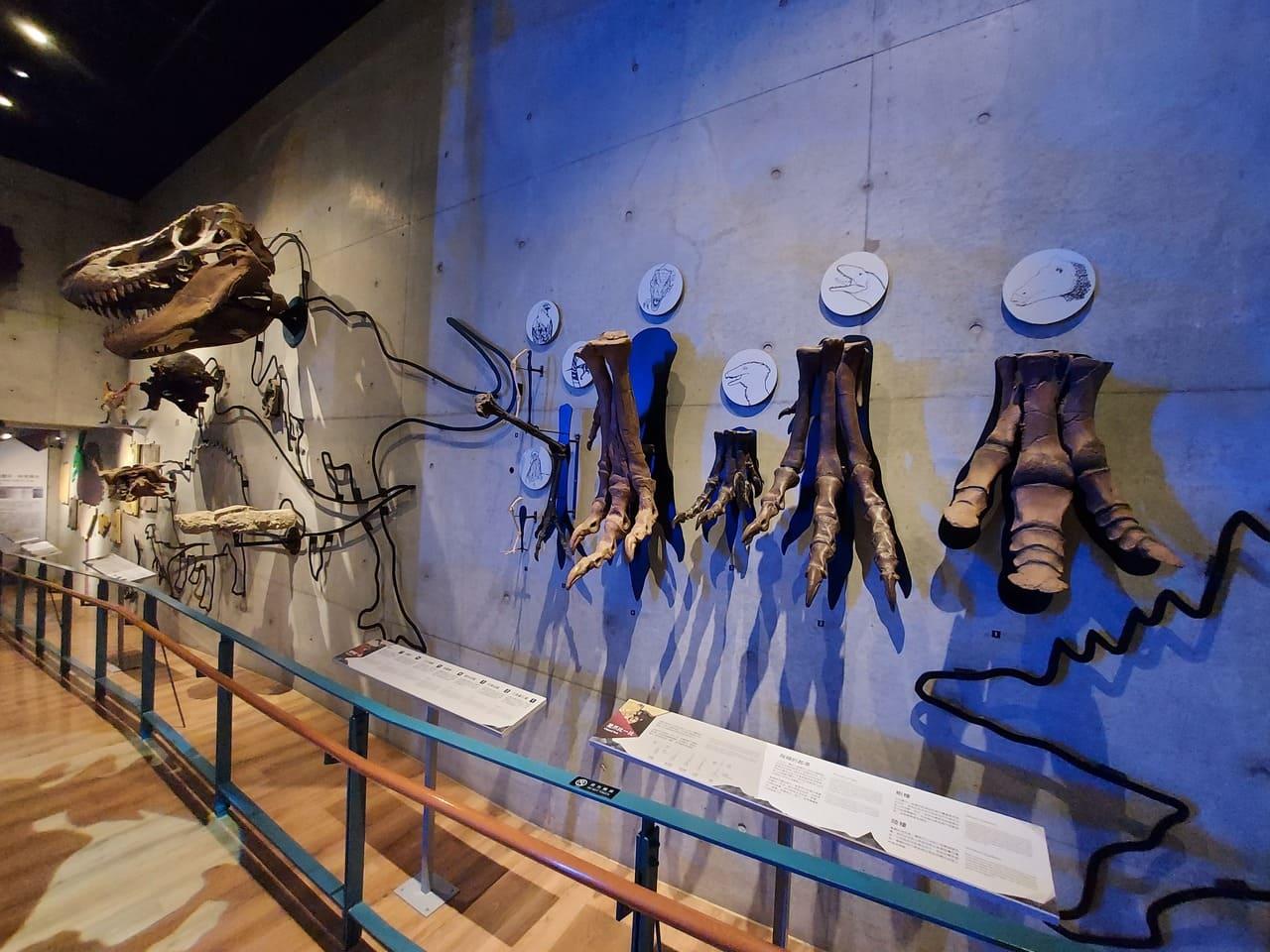 左鎮化石園區恐龍化石