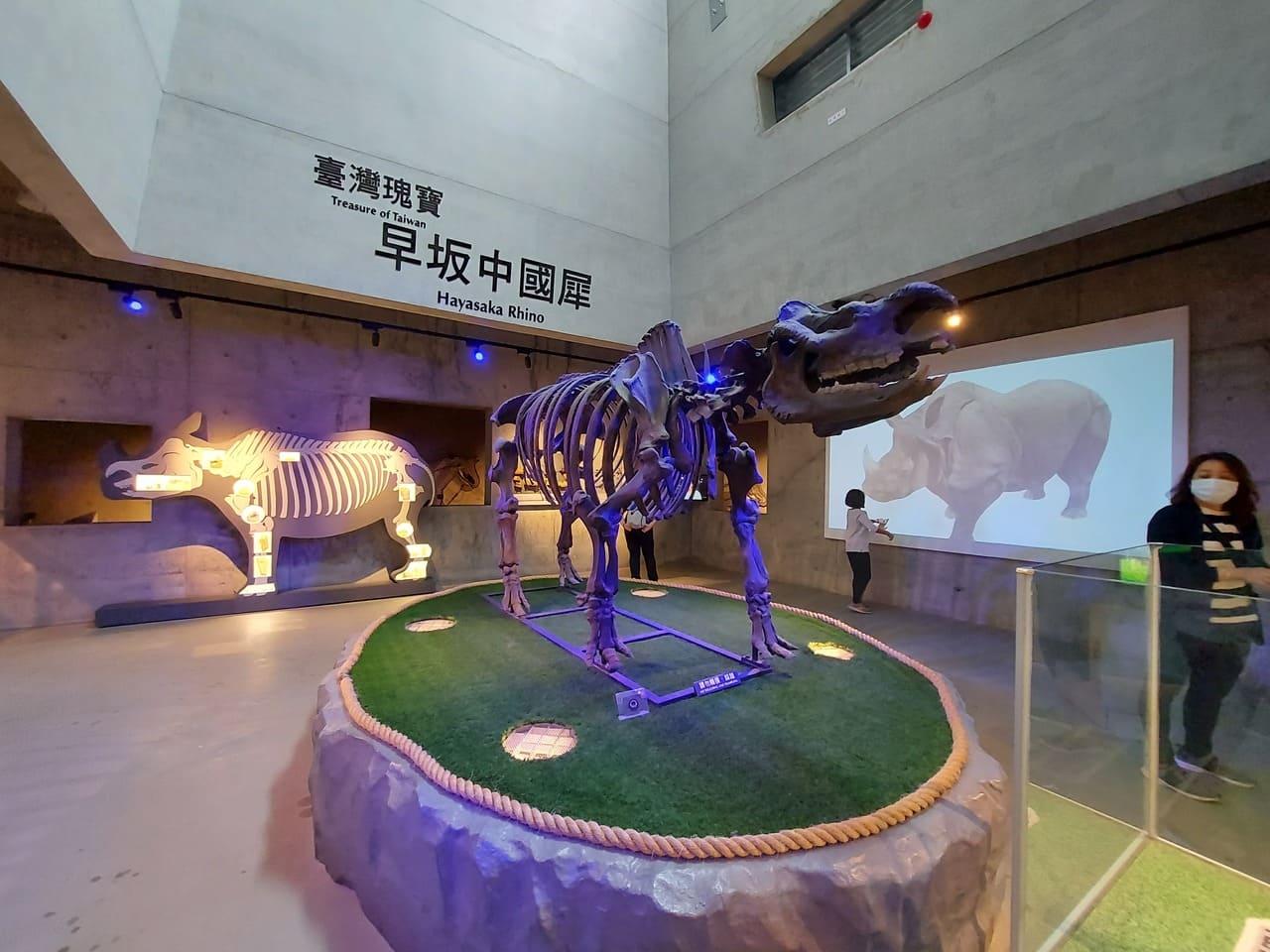 左鎮化石園區犀牛化石