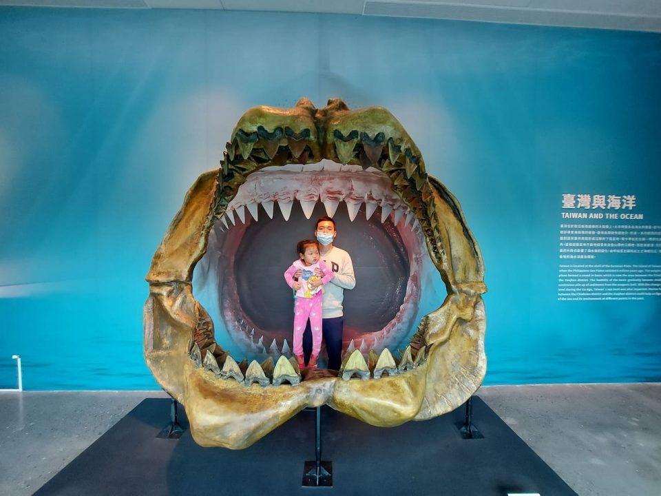 台南左鎮化石園區鯊魚化石
